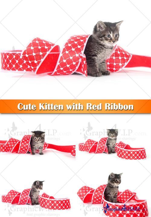 Cute Kitten with Red Ribbon - Stock Photos