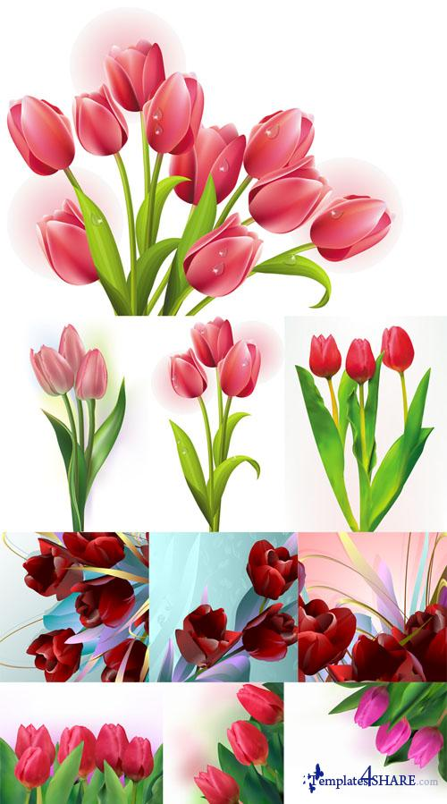 Spring Tulips Vector Pack