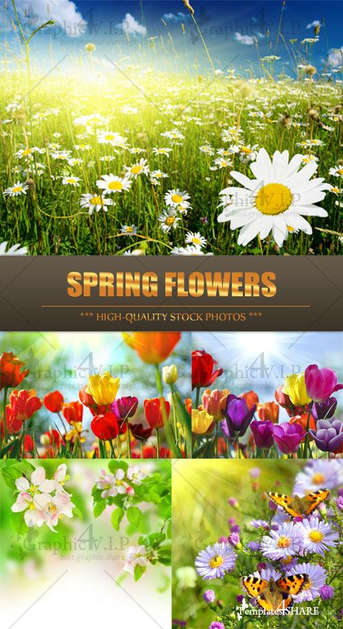 Spring Flowers - Stock Photos