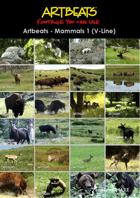 Animals: Mammals 1 (V-Line) (NTSC)