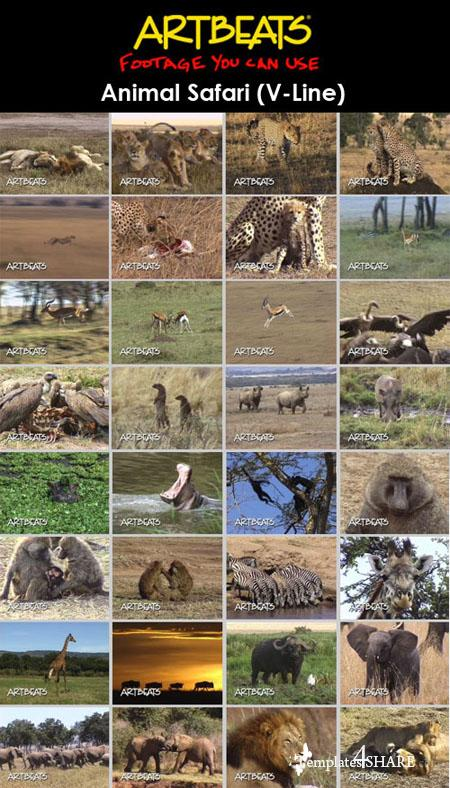 Animals: Animal Safari (V-Line) (NTSC)