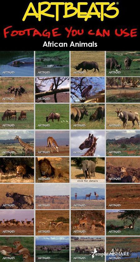 Artbeats - Animals: African Animals (NTSC)