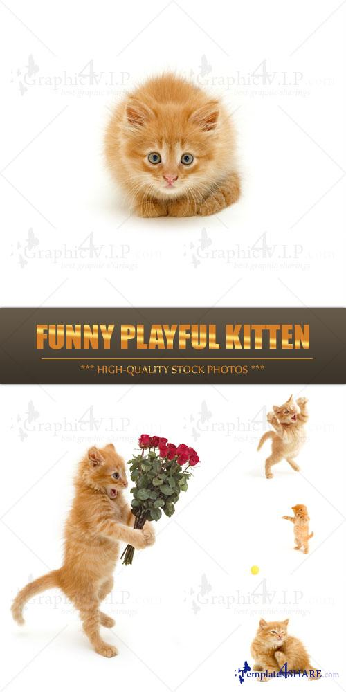 Funny Playful Kitten - Stock Photos