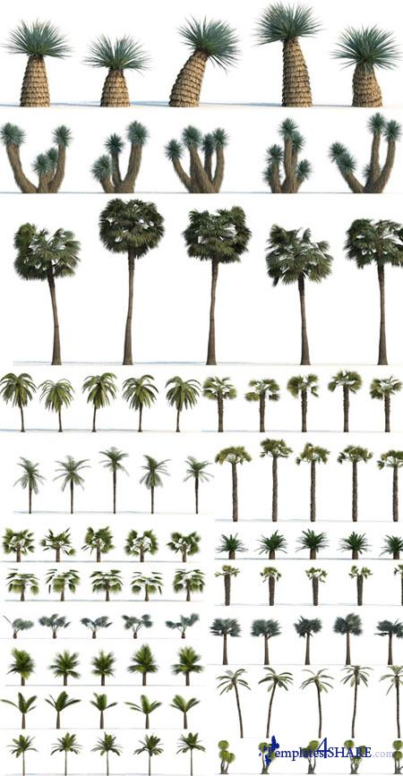 Palm Trees for Design - 3D Models