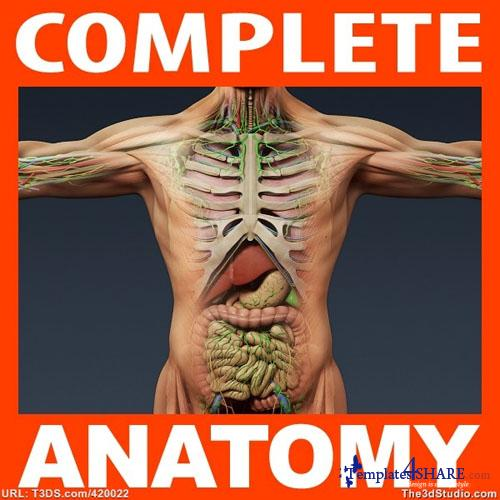 Anatomy 3D Models Collection (+Bonus Tutorials)